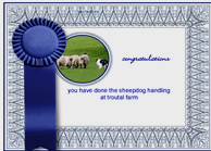 Lake District Sheepdog Experience Certificate